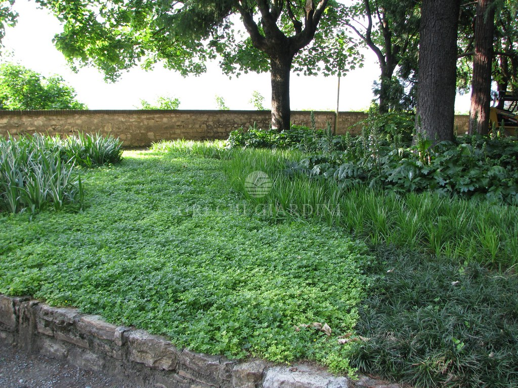 Il giardino del castello brescia i nostri lavori for Aiuole profumate
